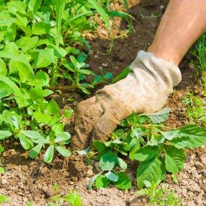 Разные способы борьбы с сорняками