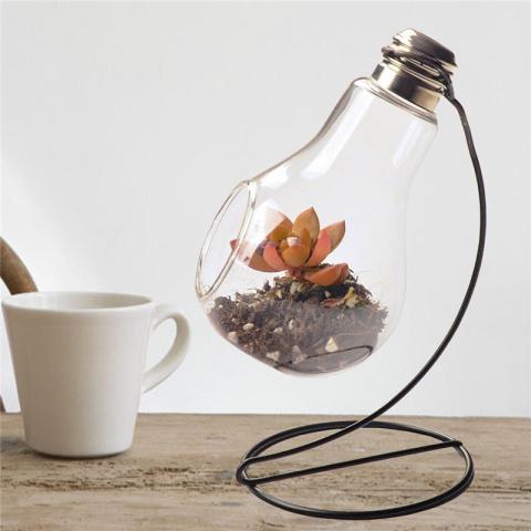 Мини-сад в стеклянной бутылке