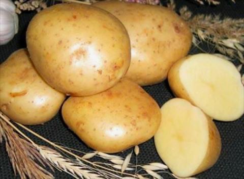 Картофель: насколько важен выбор сорта?