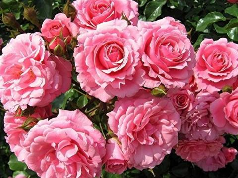 От цветов, на которые смотрят, к цветам, которые едят