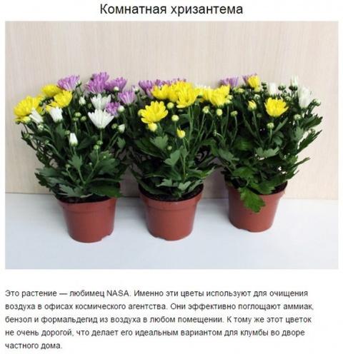 9 комнатных растений, которые отлично чистят воздух