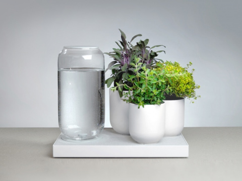 Поддон с автоматическим поливом  растений