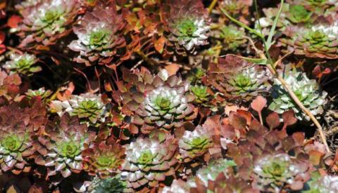 Почвопокровные многолетние растения — достойная замена газонам