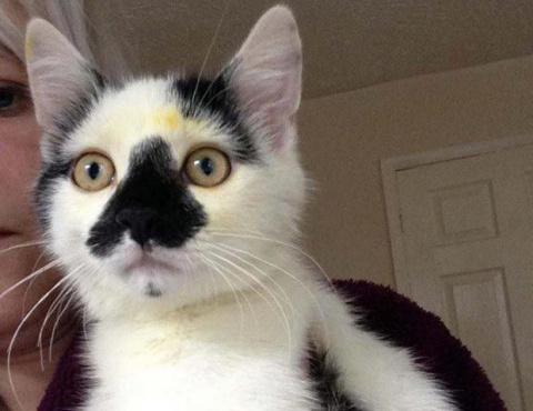 Почему никогда не стоит держать лилии и кошку в одном доме