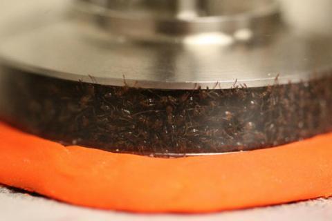 Физики доказали, что муравьи…