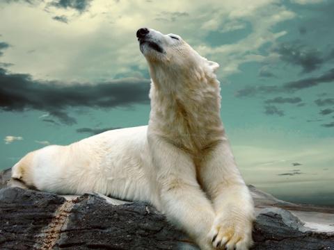 Удивительные факты о белых медведях!
