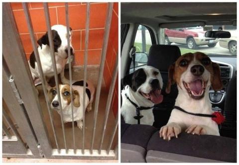 Собаки, которых забрали из п…
