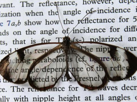Крылья бабочки помогут созда…