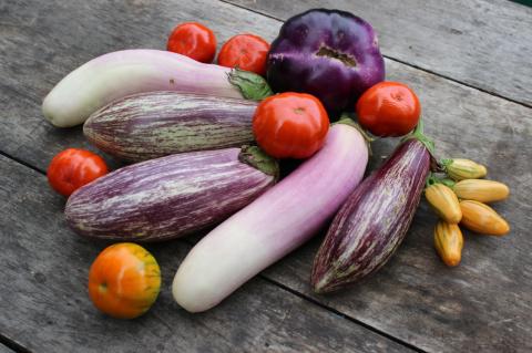 Наш урожай: баклажаны