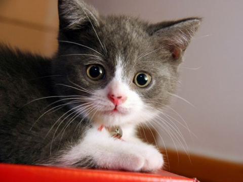 Как вывести блох у кошек доступными средствами