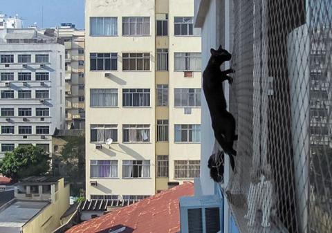 Спасателям пришлось снимать кошку-каскадера с кондиционера на шестом этаже
