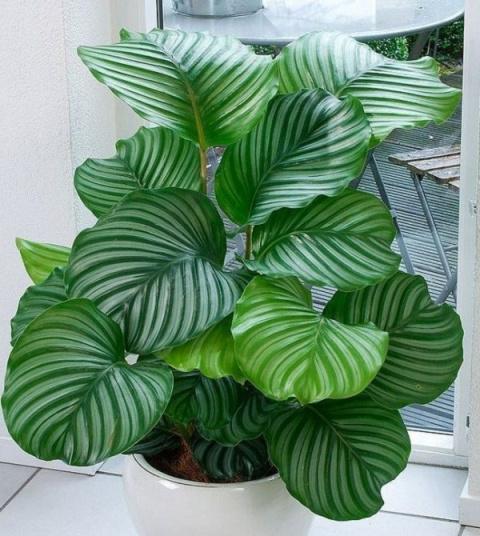 МИР РАСТЕНИЙ. 10 самых теневыносливых растений