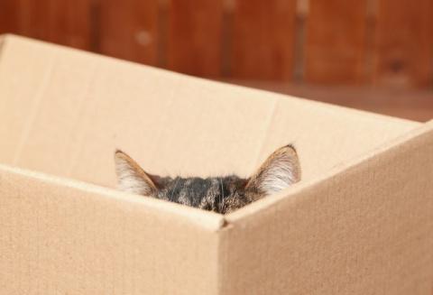 Тайна века: почему кошки так…
