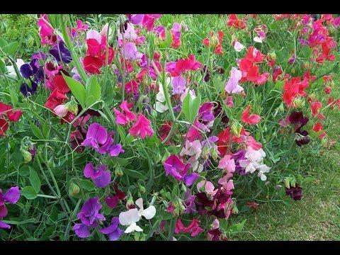 Аромат цветов для вашего сада