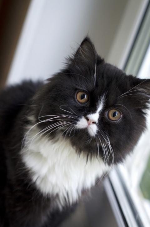 Цистит у котенка как лечить