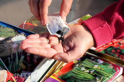 Семена со знаком брака. Как не ошибиться при покупке семян