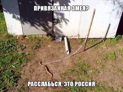 Осторожно: злая змея