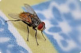 электрошок для летающих насекомых