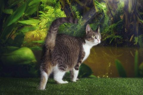 Приглашаем на выставку-пристройство всех, кто ЛЮБИТ КОШЕК и котов, и самые «ИНТЕРЕСНЫЕ НЕПОНЯТНОСТИ»!