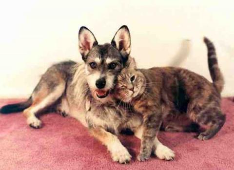 Необычное призвание: собака, которая спасает бездомных кошек