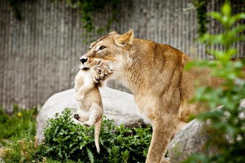 Животные детёныши со своими мамами