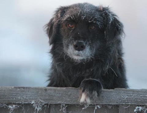Лишь бы не сон... Посвящается всем брошенным собакам
