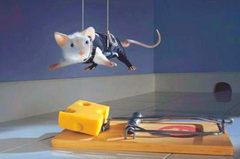 Как избавиться от мышей: под…