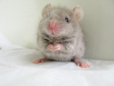 Из-за маленькой мышки отмени…