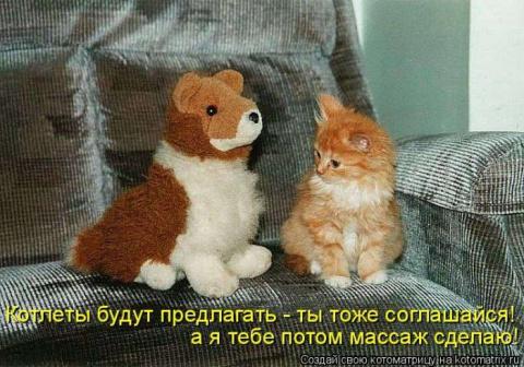 Всемирный день кошек! Всех б…