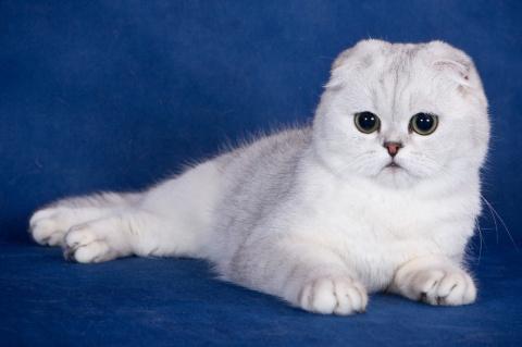 КОШКИН ДОМ. Необычные породы кошек