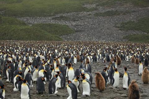 Экскурсия по царству пингвинов