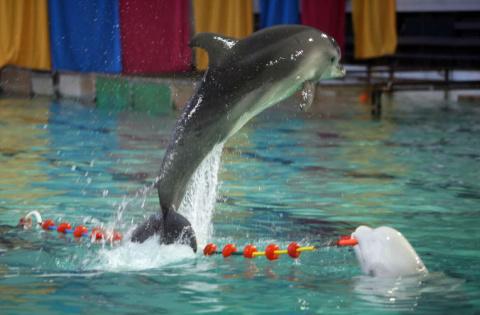 Московский дельфинарий показывал петербуржцам животное из Красной книги