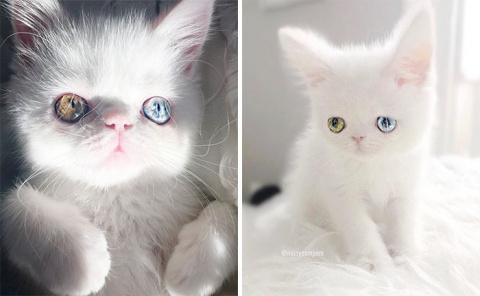 Пам Пам — котенок с разноцве…