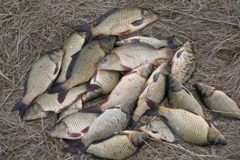 Простой и легальный способ наловить очень много рыбы