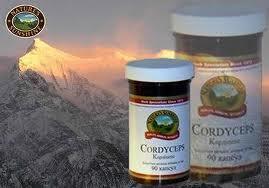 Кордицепс – гриб или лекарство?