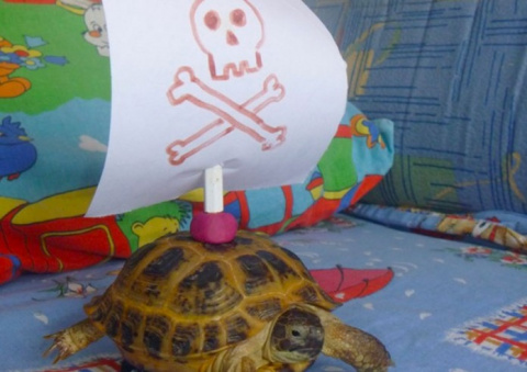 Светящаяся черепаха: легенда…