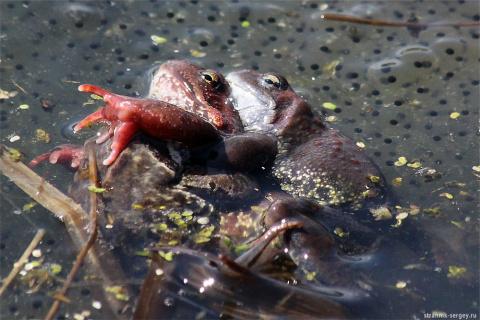 Забавные лягушки весной