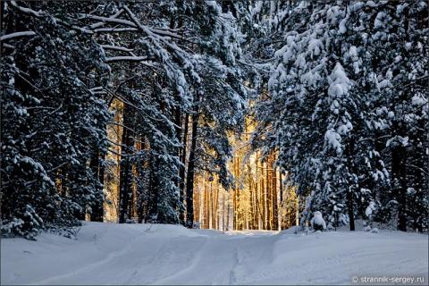 Сладкий пир зимней природы