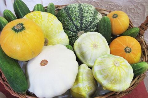 Три толстяка. Секреты выращивания кабачков, патиссонов и тыкв