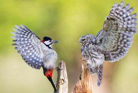 Красота мира животных в фотографиях