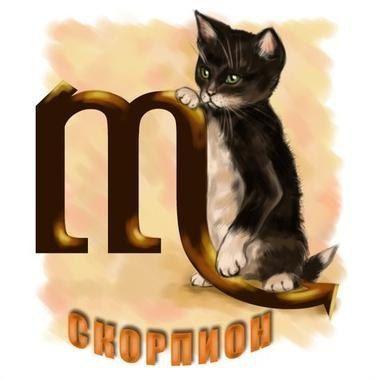 Кошачий гороскоп. Кошка Скорпион