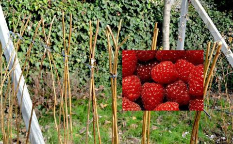 Уход за малиной осенью: осенняя обрезка, обработка почвы и подкормка