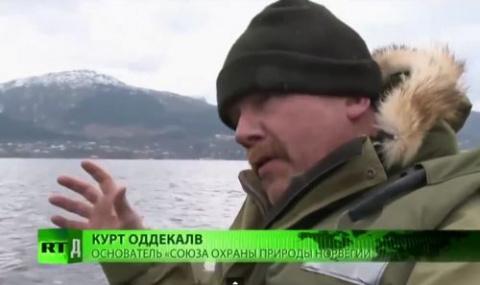 Эколог: «Норвежский лосось —…