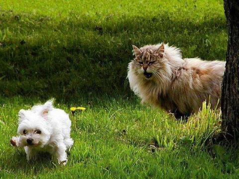 10 различий между кошатниками и собачниками