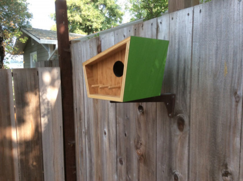 Птичий домик круче, чем человеческий