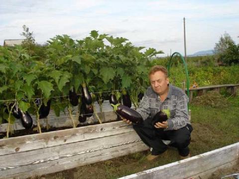 Уникальный огород Игоря Лядова! Высокие грядки — залог хорошего урожая