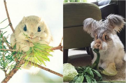 20 самых добрых фотографий животных, которые появлялись в Сети в 2015 году