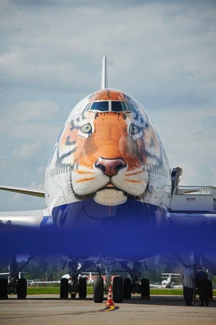 Трансаэро запустило в небо тигра