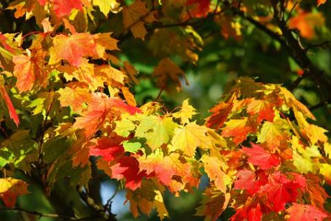 Золотая осень от Михалыча - …