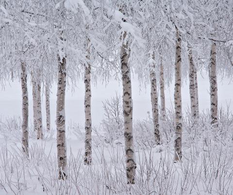 Победители международного фотоконкурса пейзажной фотографии 2015